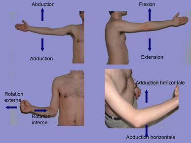 fonctions de l'épaule